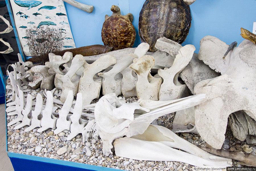Кости кита в колекции музея ракушек Корфу