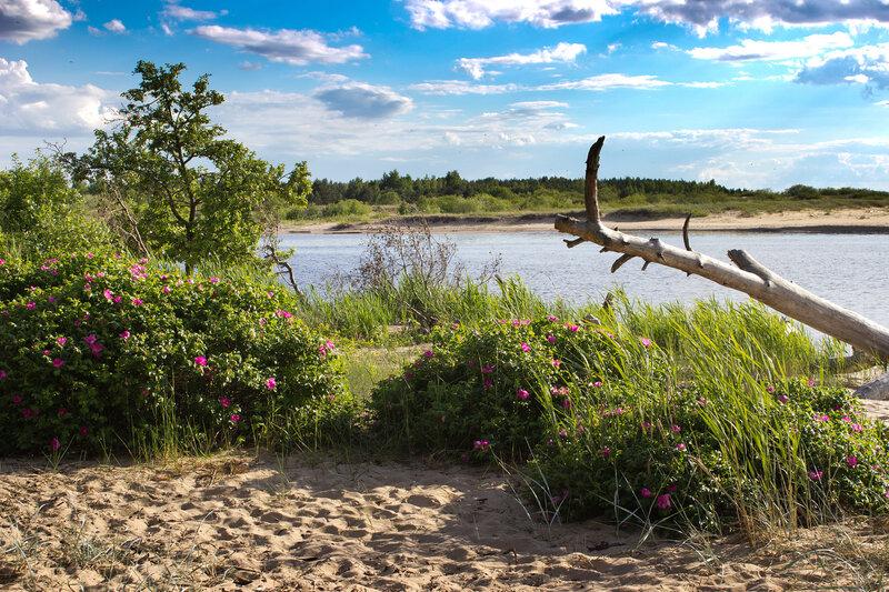 устье реки Гауя