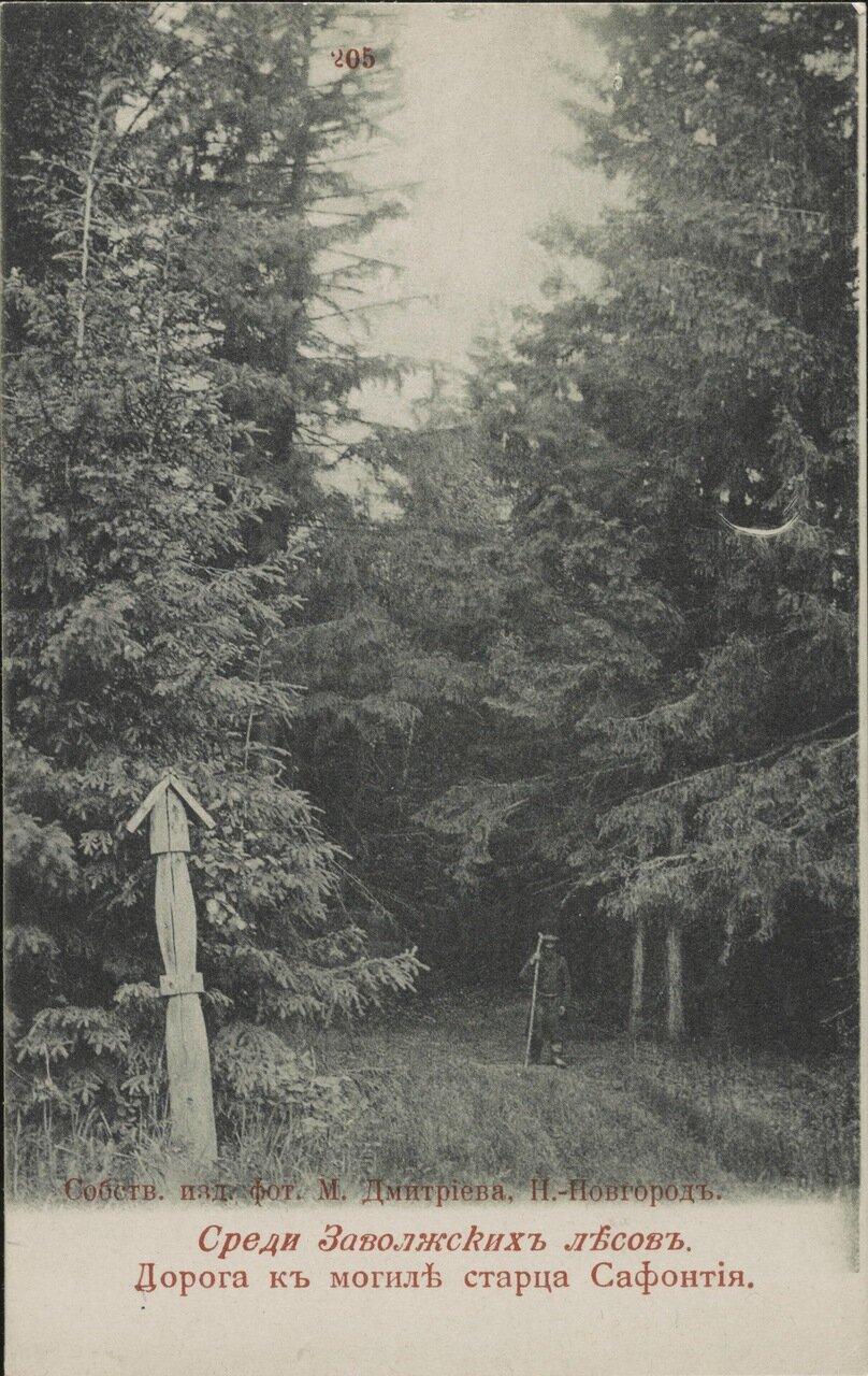 Дорога к могиле старца Сафонтия