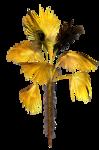 R11 - Palms - 2013 - 3 - 022.png
