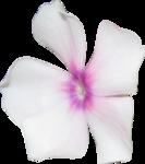 MRD_Promises_pink flower.png