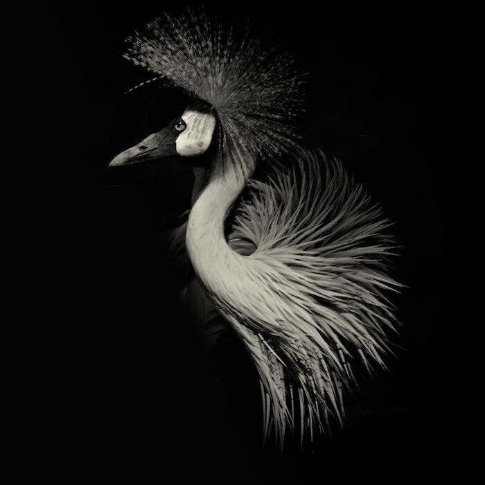 животных на черном фоне