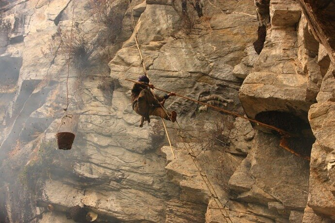 Сбор гималайского мёда (30 фото)