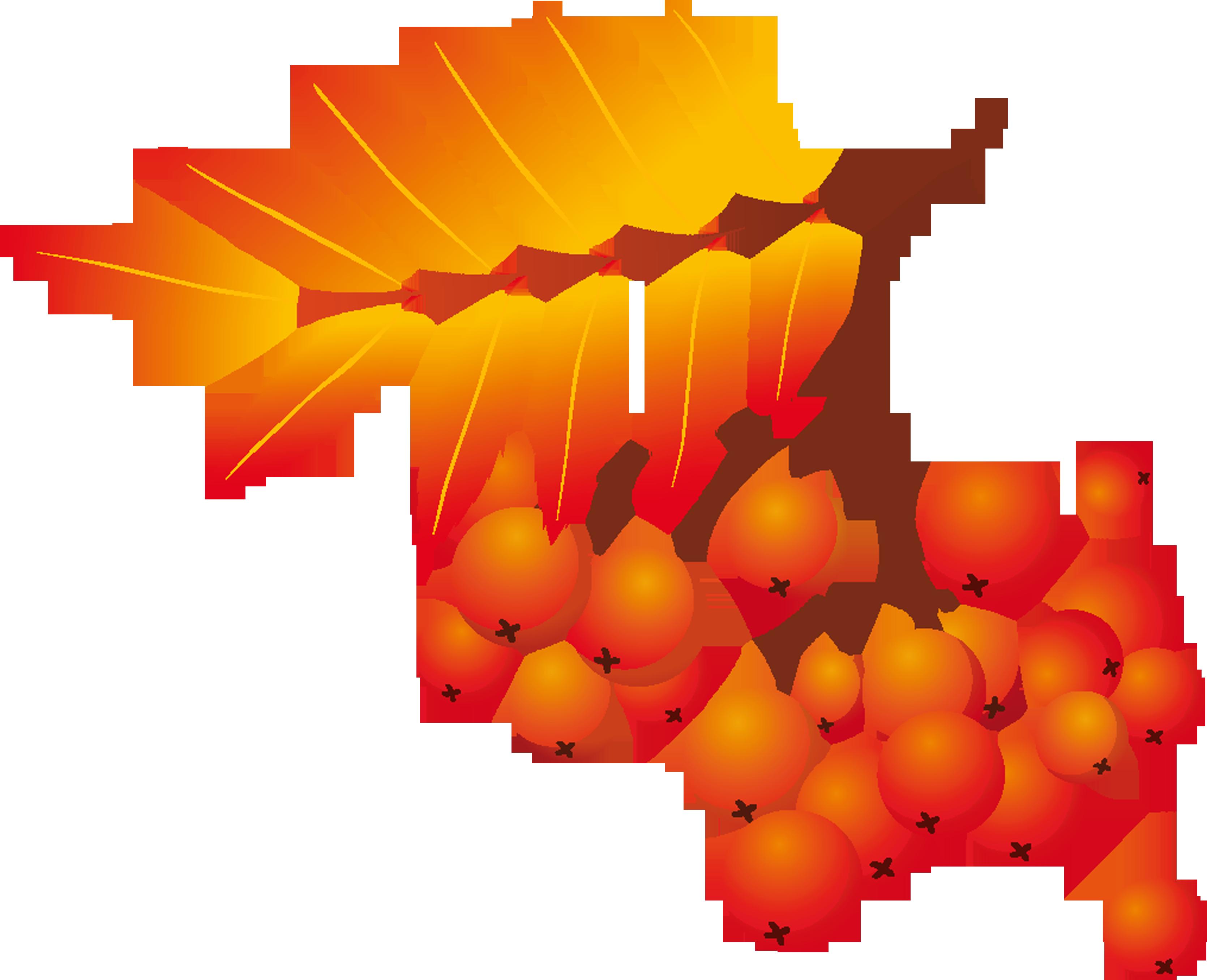 Картинка ветки рябины с ягодами, самый