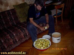 как сохранить урожай яблок
