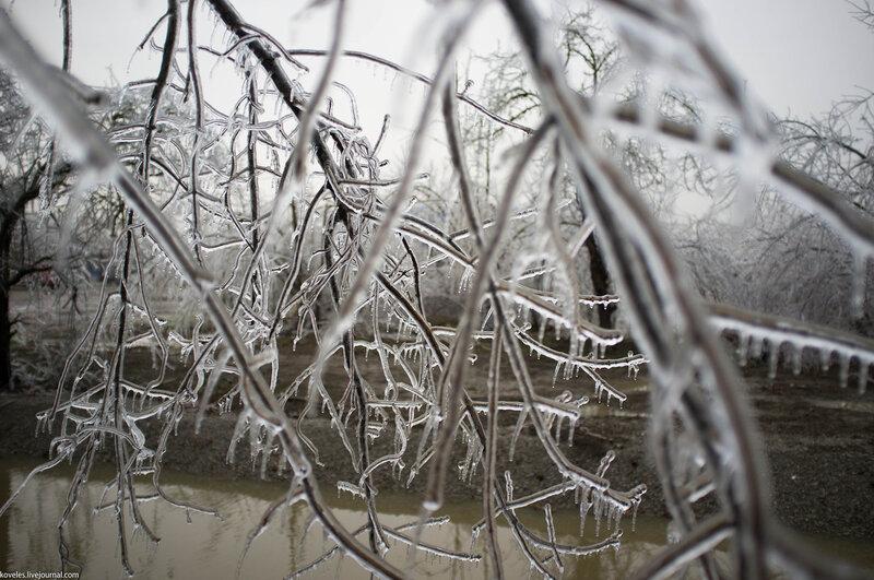 природа в ледяном плену фото нужно было уговаривать