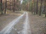 Характерная дорога для лесного массива
