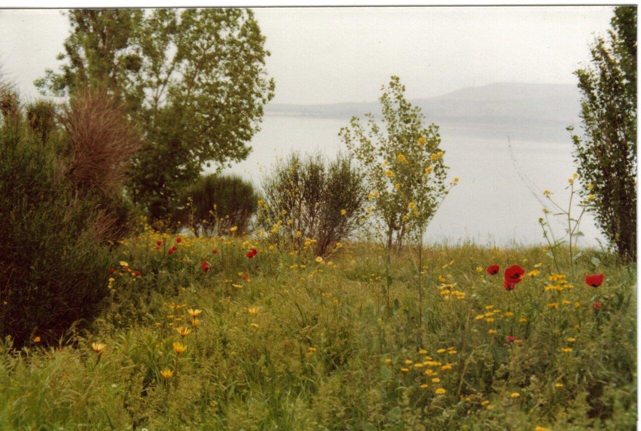 На берегу в Тбилиси