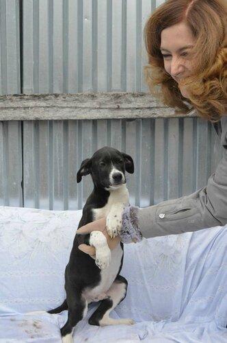 Пол собака из приюта догпорт в добрые руки фото