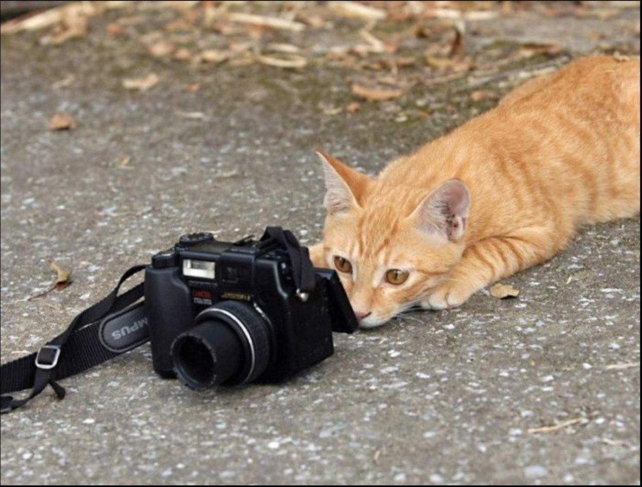 Учит как обращаться с киской 10 фотография