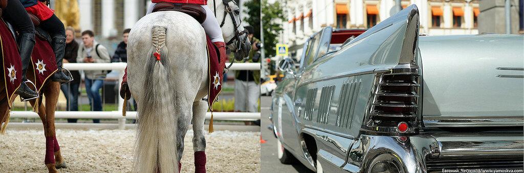 Лошади.11..jpg
