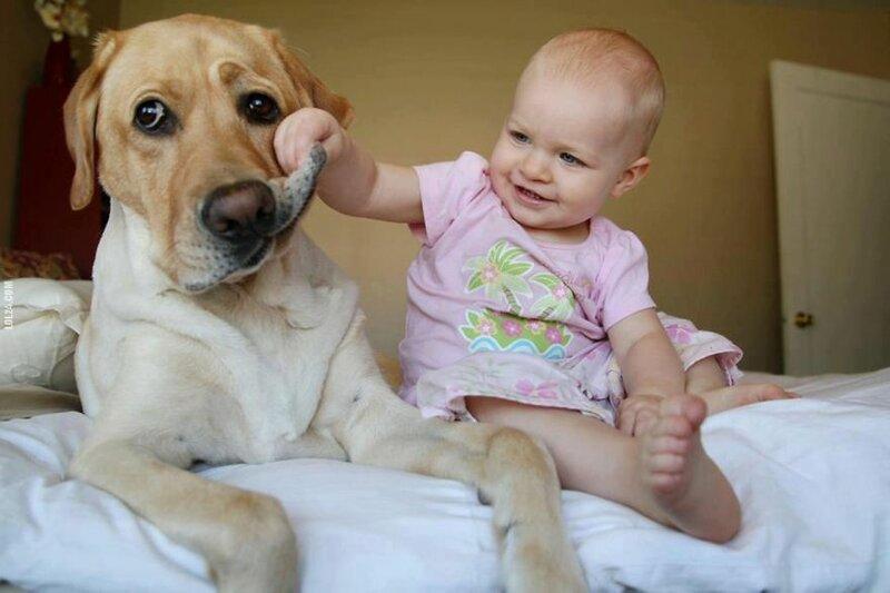 Маленькие дети, большие собаки