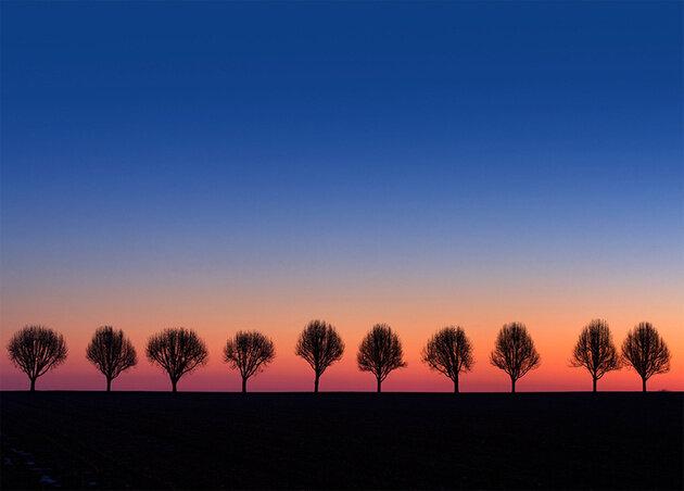 Не стой как дерево