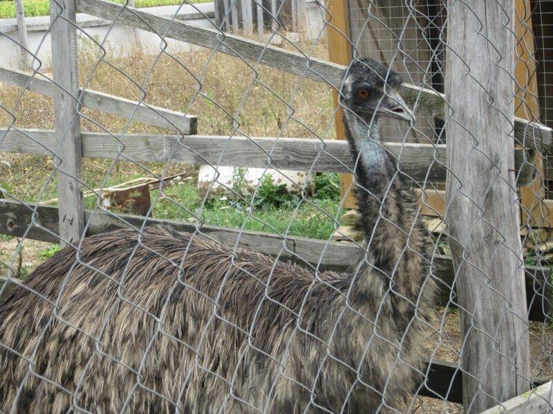 Ферма по выращиванию и разведению страусов 90