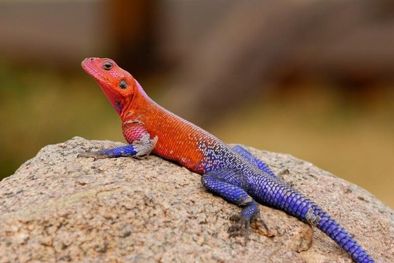 Удивительные красные животные