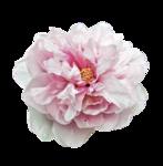 цветы_розовые (7).png