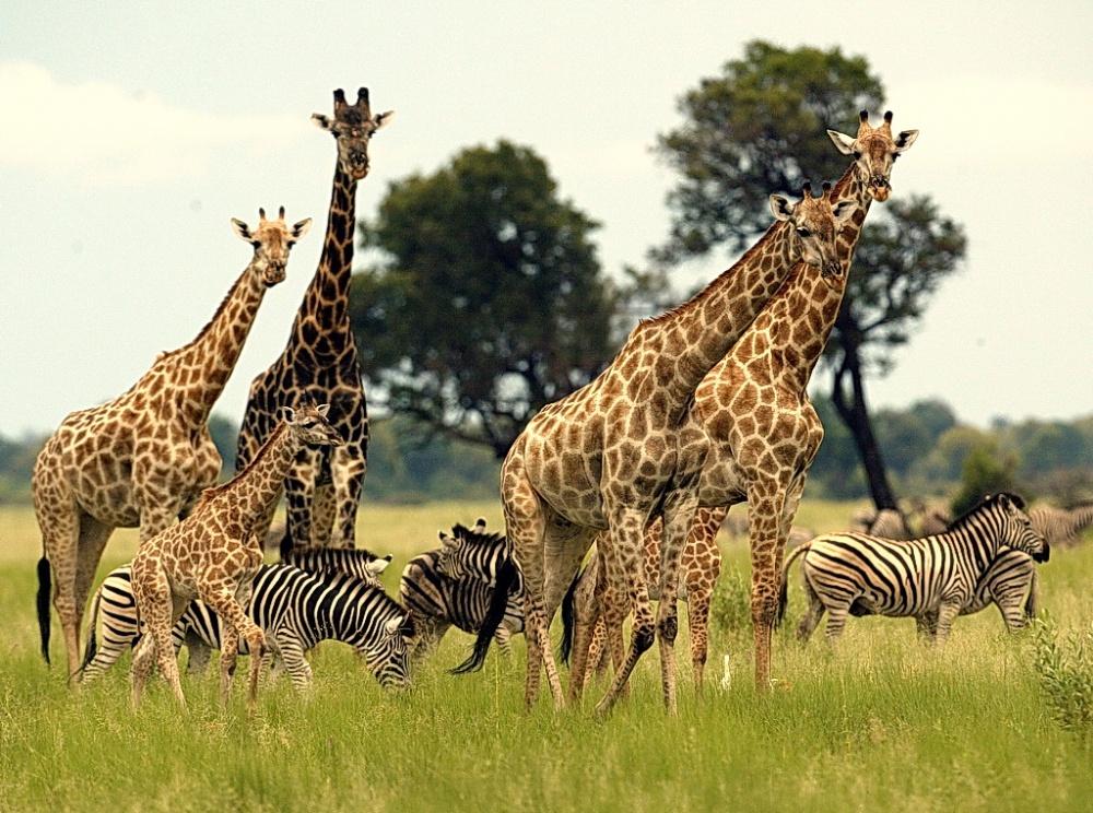 © weandworld  Это старейший парк вЮАР, который является частью биосферного резервата Крюгер-т