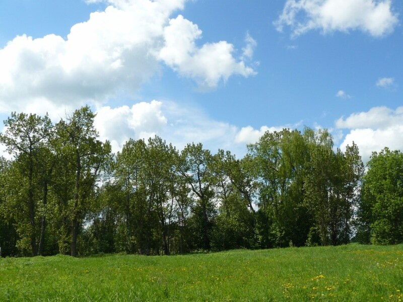 Ботановский парк