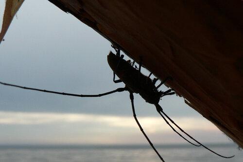 из жизни жуков пара