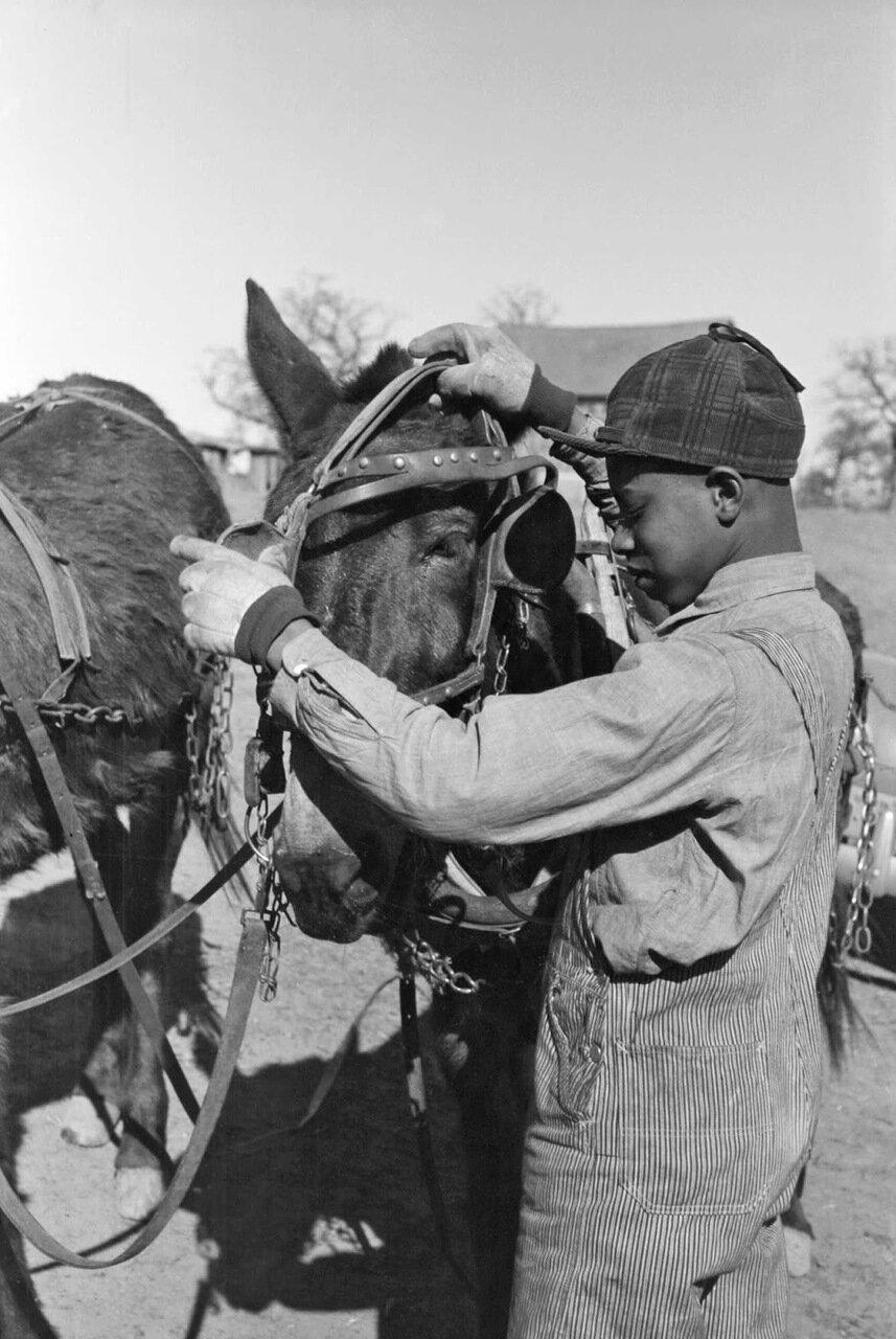 Сын Помп Хэлла, негритянского фермера арендатора, распрягает мула на ферме отца, округ Крик, Оклахома, 1940