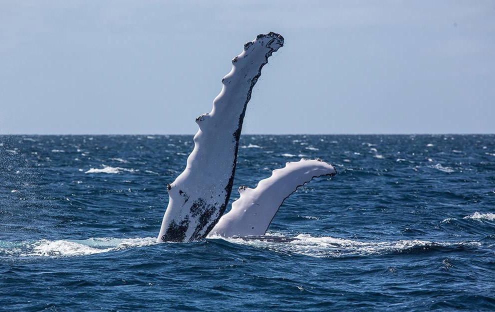 киты круги пальмы маски песни острова маска