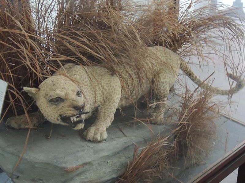 вымирание человек самый большой времена года хищники в природе животные волк волки