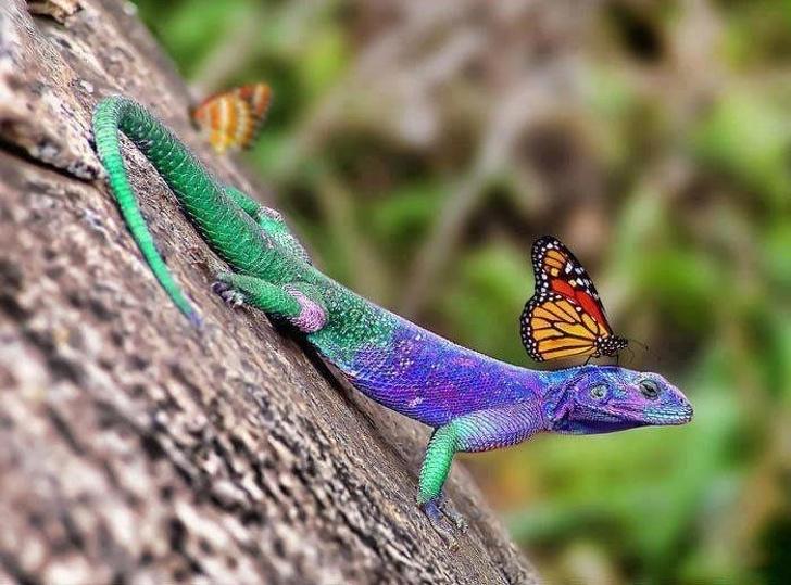 Фотография фотограф необычное В мире сделай сам мир удивительное Дели