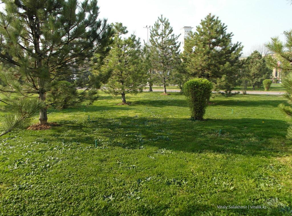 Трава в сквере Амира Темура, Ташкент