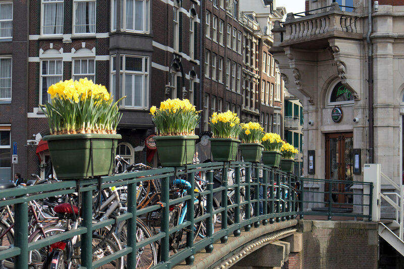Spring Festival of Flowers in Amsterdam. Daffodils in a tub opposite the building on the bridge on the canal