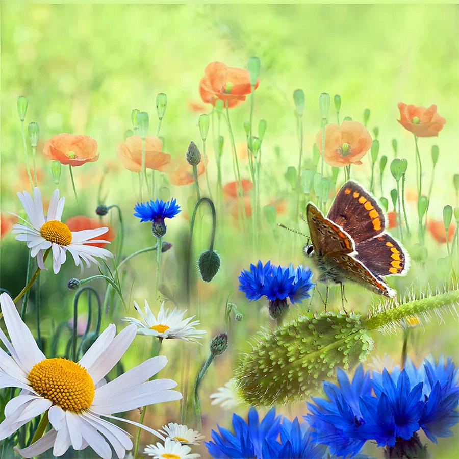 Открытки доброе утро с пожеланиями красивые природа, финиш как послать