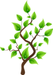 tree (27).png