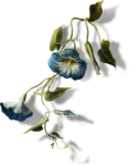 ldavi-paintersfaeries-flower8.png