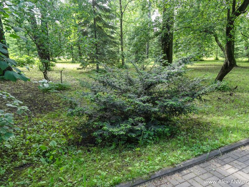 С виду обычный лес, но в нём много растений, которые просто так в лесу не найдёшь.
