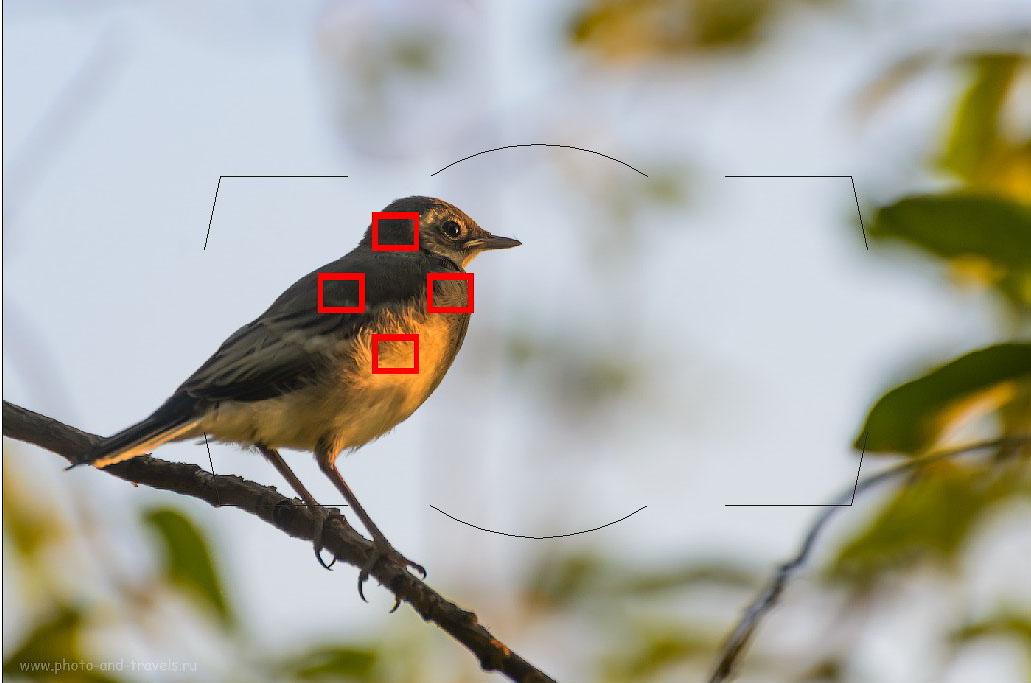 Фотография 8. Групповая АФ особенно хорошо подходит для фотоохоты на мелких птиц. Эта функция присутствует в современных зеркалках, например, в Nikon D810.