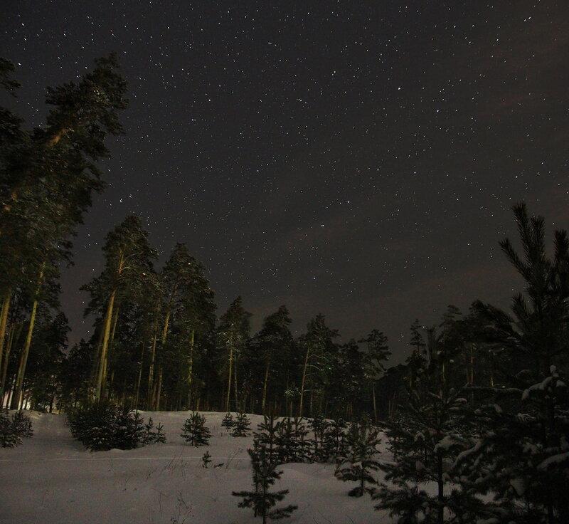 Большая медведица над лесом