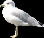 MRD_Promises_pigeon.png