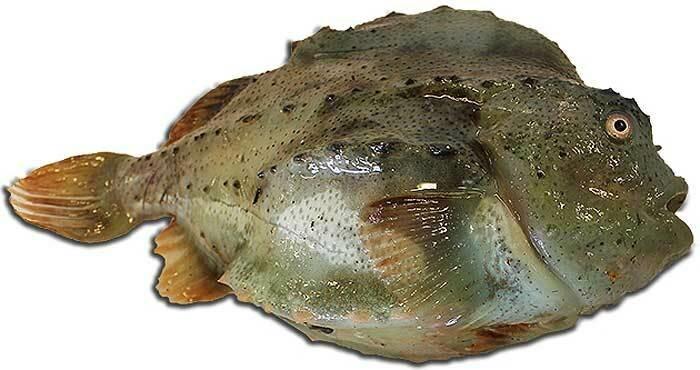 Пинагор или воробей-рыба