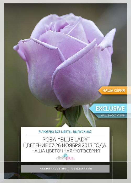 Я люблю все цветы, выпуск 82 | Цветут ли розы в ноябре ?