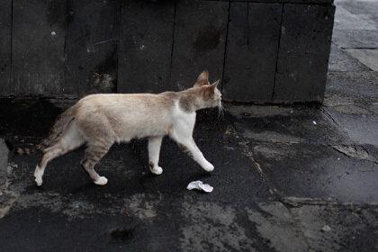 Компания бездомных британских кошек взмыла в воздух из-за сильного ветра