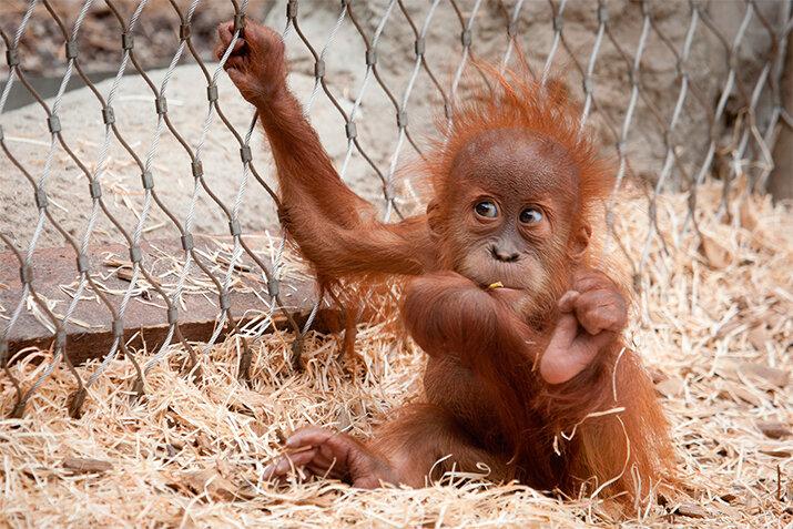 Смешная обезьянка - животные из дикой природы, интересные кадры