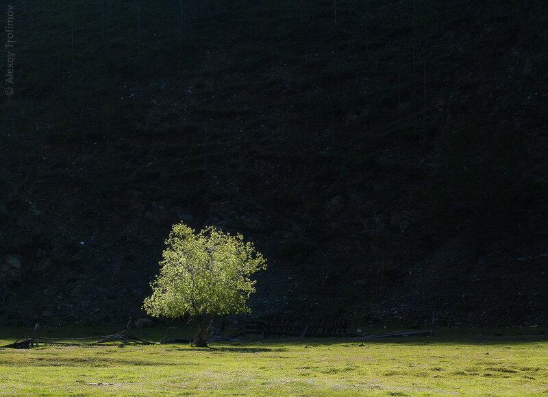 Деревосвет