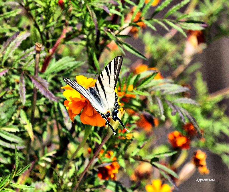 Бабочковое