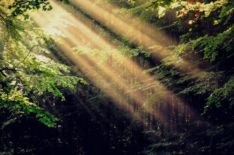 Луч солнца