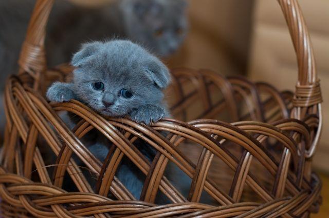 Пьяные вСеверной Осетии вызвали скорую помощь котенку— Ложный вызов