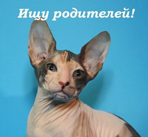 http://img-fotki.yandex.ru/get/9108/63012238.35/0_aa183_deea9e41_L.jpg