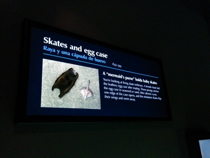 monterey bay aquarium: skate egg case
