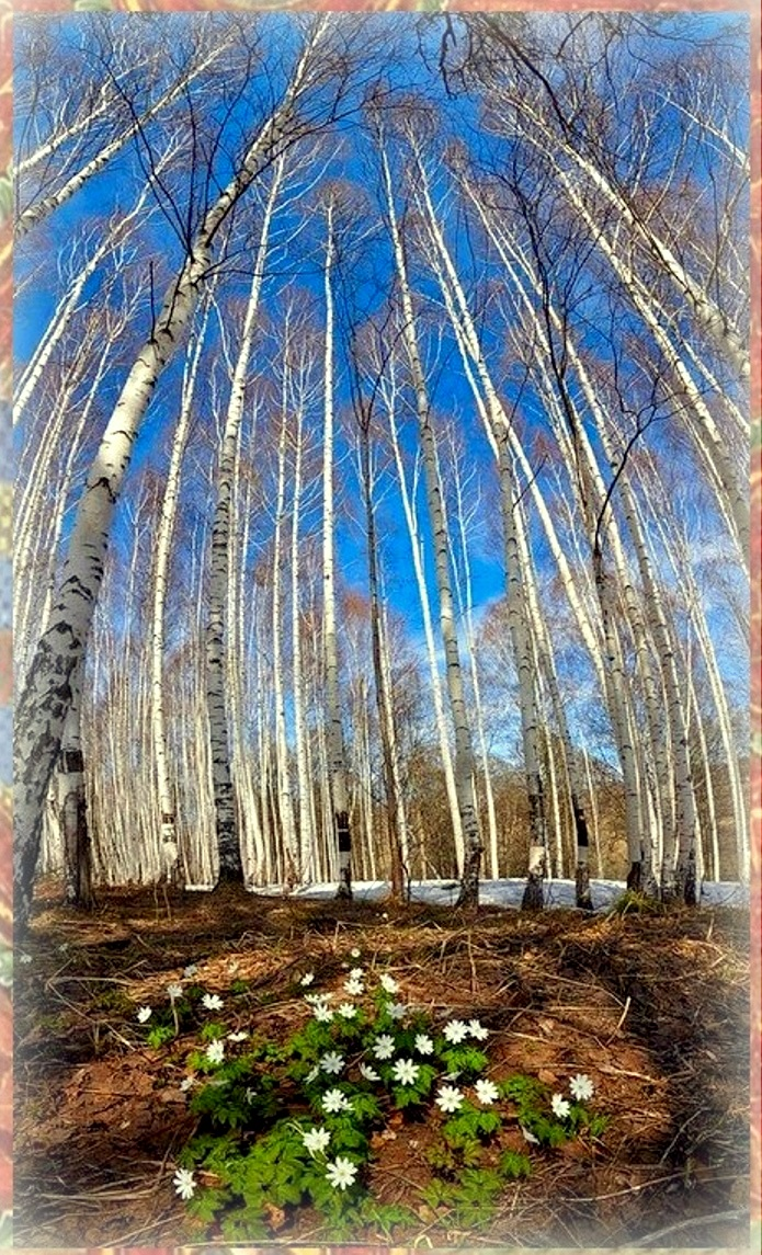 Природа, пейзаж, фото из интернета (70).jpg