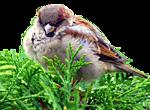 http://img-fotki.yandex.ru/get/9108/97761520.1e/0_7d63d_1d48f157_orig.png