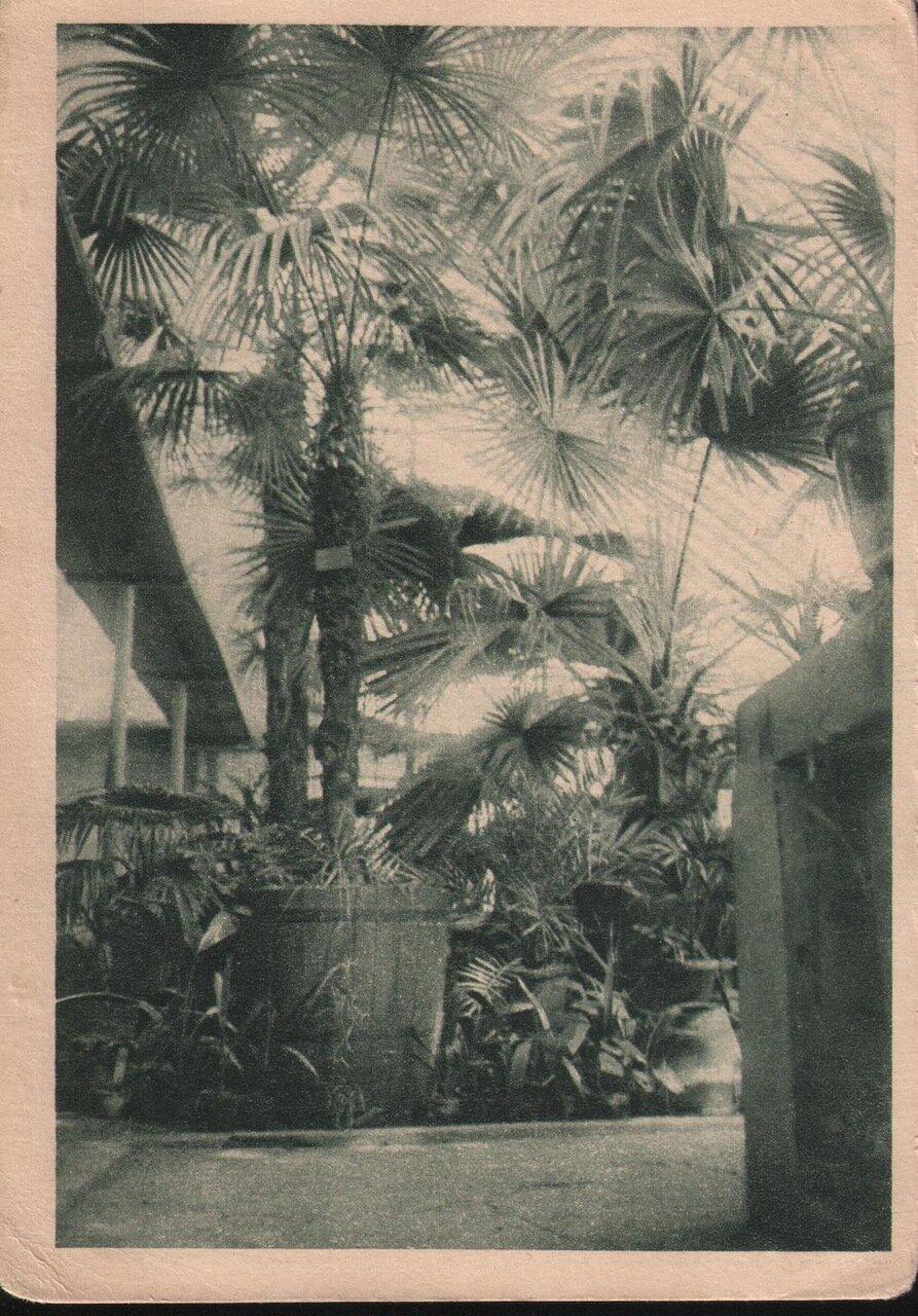 Ботанический сад. В оранжерее. 1931 г.