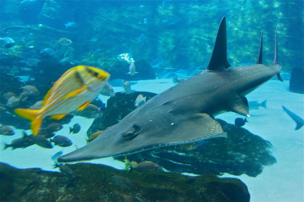 GA Aquarium Feb 2010  - 276
